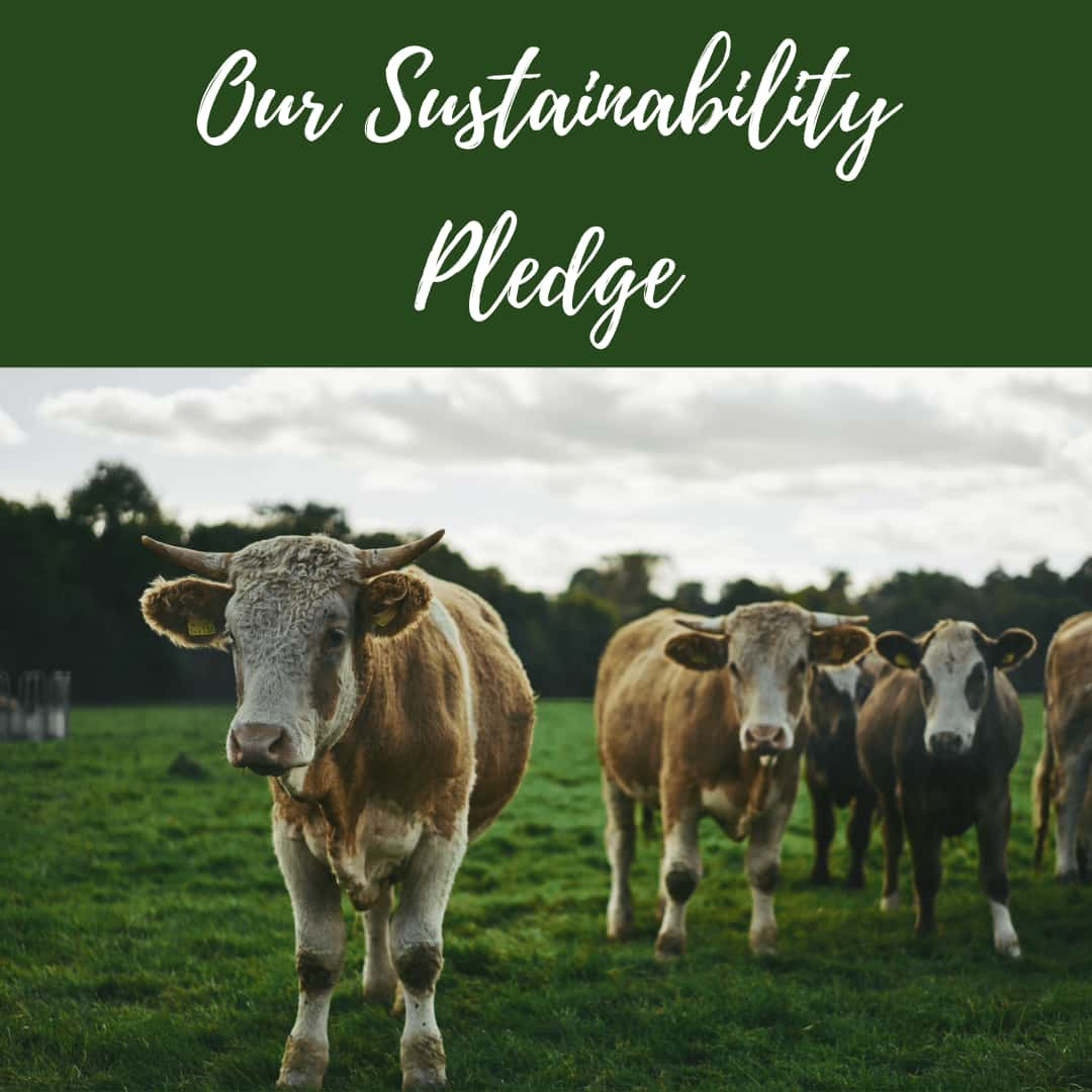 Sussex Sustainability Pledge