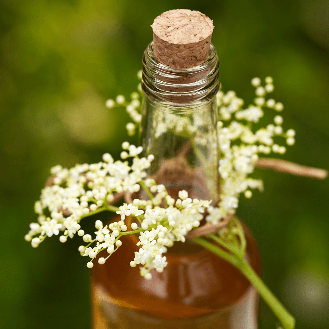 Forager's Fizz Kits - Elderflower Champagne