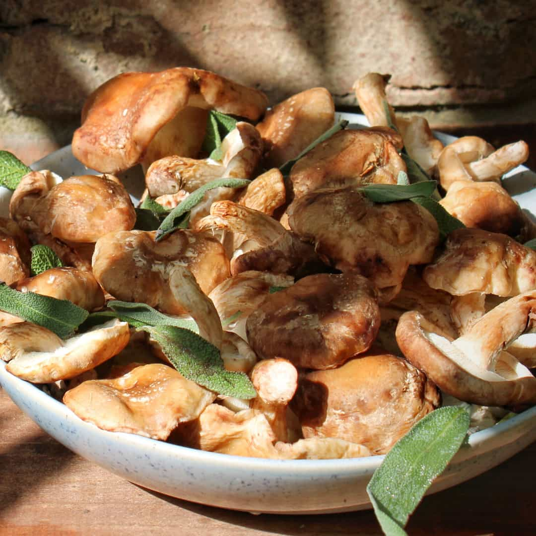 Biodynamic Mushrooms (180g)